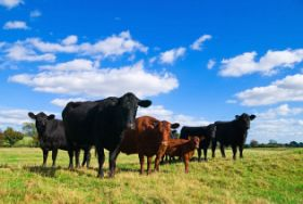 Beef Production: Insights on Carbon, Methane and Feeding the Future